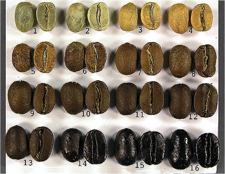 coffee-bean-color-spectrum